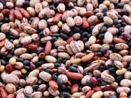 I Legumi: piccoli semi dai grandi poteri