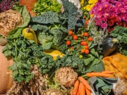 6 curiosità sui vegetali che forse non conoscevi