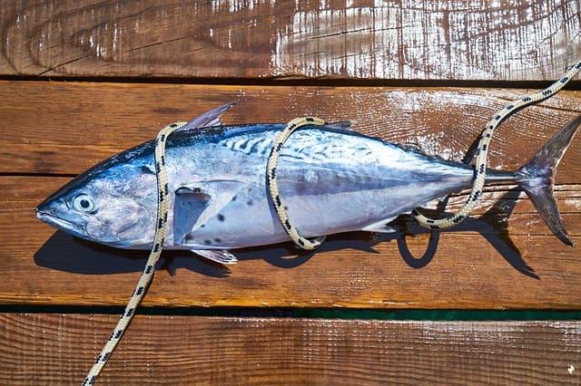 Come scegliere un tonno più sostenibile
